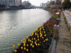 flowers in Fukuoka